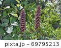 オニク(北海道・上士幌町) 69795213