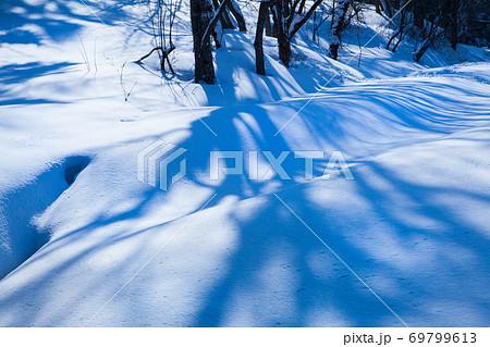 早朝の雪原に樹影がきれいに映っています。広島県 69799613