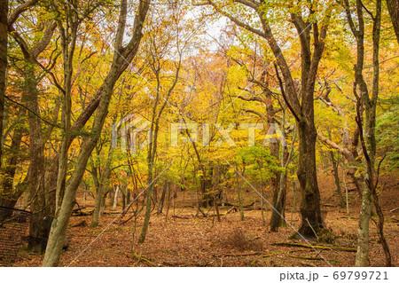 秋深まる紅葉の奥日光 竜頭ノ滝周辺 69799721
