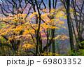臥竜山の紅葉風景です。しっとりとした自然林が続きます。 69803352