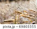朝露とネコジャラシの風景です。自然の原野風景です。 69803355