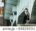橋脚に片足で留まるアオサギ 69826531