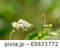 小さく綺麗な蕎麦の花 69835772