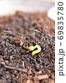 蕎麦の発芽 69835780