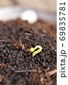 蕎麦の発芽 69835781