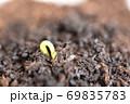 蕎麦の発芽 69835783