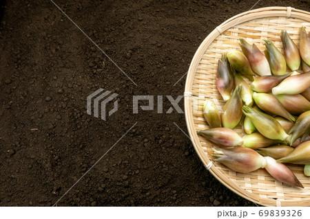畑土上に置かれた竹製ザルにのったミョウガ 69839326
