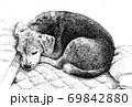 ベッドですやすや眠るビーグル犬 69842880