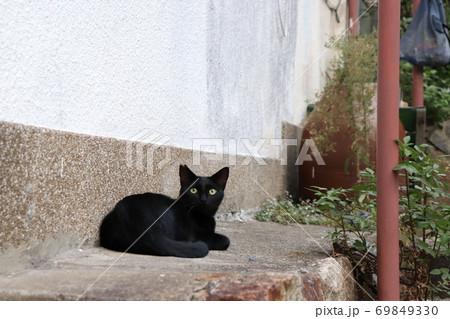 いつものおばちゃんを待っている黒猫 69849330