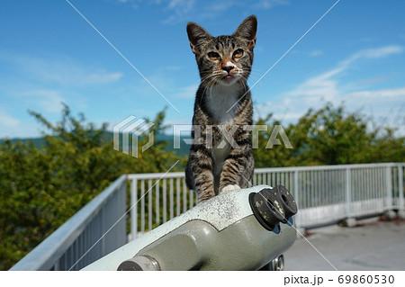 真夏日に日陰でのんびり過ごすキジトラ野良猫の子猫 69860530
