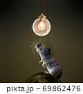 ペンダントライトとネズミ 69862476