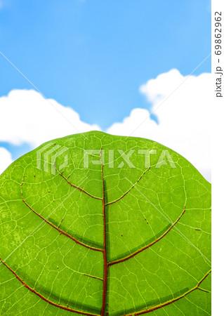 空と葉っぱ 69862962
