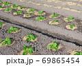 白菜畑 69865454