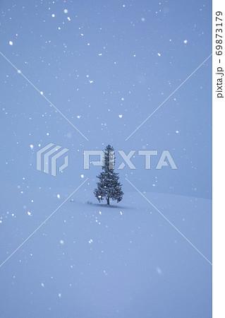雪降る朝にたたずむクリスマスツリーの木 69873179