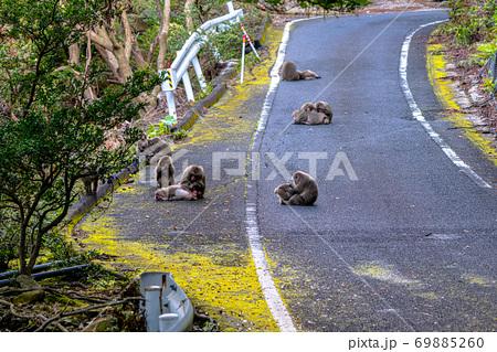 緑の回廊で毛づくろいをするヤクザル。世界遺産・環境・エコのイメージ表現 69885260