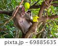 樹上でくつろぐヤクザルの母と子ども(8月)世界自然遺産屋久島 69885635