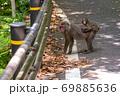 母の背に乗ったヤクザルの子ども(8月)世界自然遺産屋久島 69885636