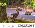 春の緑の回廊でくつろぐヤクシカとヤクザル(4月)世界自然遺産屋久島 69885894