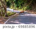 春の緑の回廊でくつろぐヤクシカとヤクザル(4月)世界自然遺産屋久島 69885896