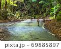 夏の緑の回廊を移動するヤクシカとヤクザル(8月)世界自然遺産屋久島 69885897