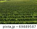 葡萄畑 69889587