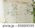 白樺 69889599