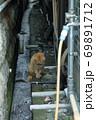睨む猫 69891712