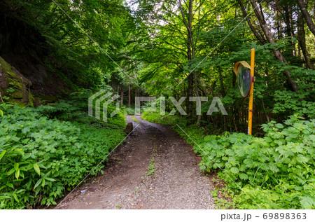 草木が生い茂る夏の林道(落石・カーブミラー) 69898363