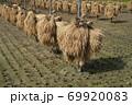 昔ながらの天日干しのお米の風景 69920083