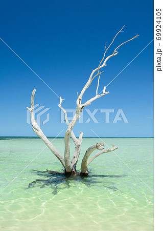 南国リゾートの海に浮かぶ木 69924105