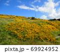フォークランド諸島 スタンリー 花 ジオラマ風 69924952