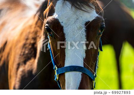競走馬の牧場 仔馬 イメージ 北海道 69927893