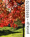 ピクニック日和、公園、里山に行こう-2 69933570