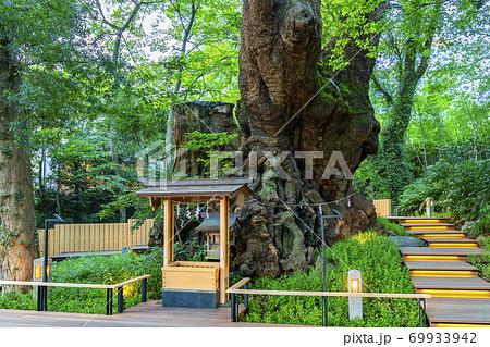【静岡県】熱海市 来宮神社にある天然記念物の大楠 69933942