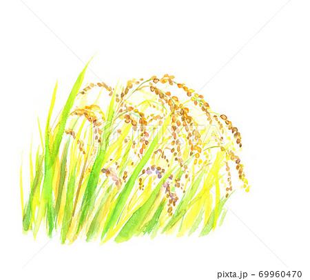 水彩で描いた黄金の稲穂のイラスト 69960470