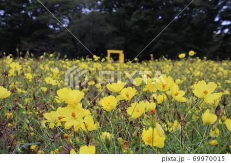 華やかな黄色いレモンブライトの花畑と不思議な世界への扉 69970015