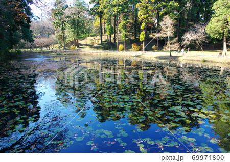 佐倉城址公園の姥が池(千葉県佐倉市) 69974800