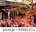 木造格子の前にある紅葉 69981211