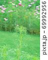 緑の風景 69992956