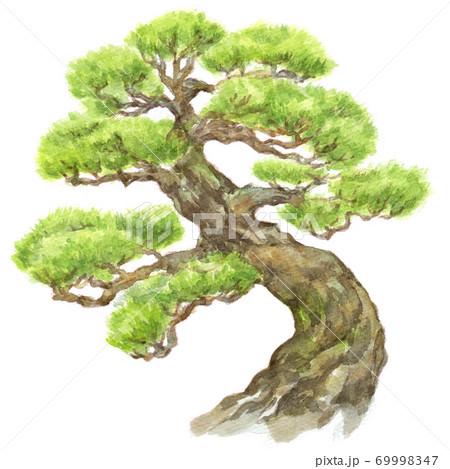 水彩松の木 69998347