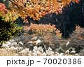 晩秋、木々の競演風景-3 70020386