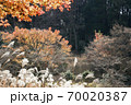 晩秋、木々の競演風景-2 70020387