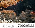 晩秋、木々の競演風景 70020388