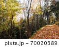 落葉の山道、落ち葉でフカフカの山道を散策する心地よい初冬風景-3 70020389