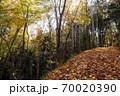 落葉の山道、落ち葉でフカフカの山道を散策する心地よい初冬風景-2 70020390