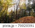 落葉の山道、落ち葉でフカフカの山道を散策する心地よい初冬風景 70020391