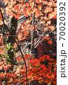 彩の秋、晩秋の林色の変化が面白い秋風景 70020392