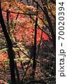 錦秋の林-2、木々のシルエットと黄葉のバランスが良い秋風景 70020394