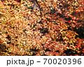 錦秋、一面の紅葉 70020396