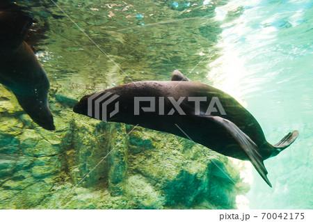 よこはま動物園ズーラシア・神奈川県、日本 70042175